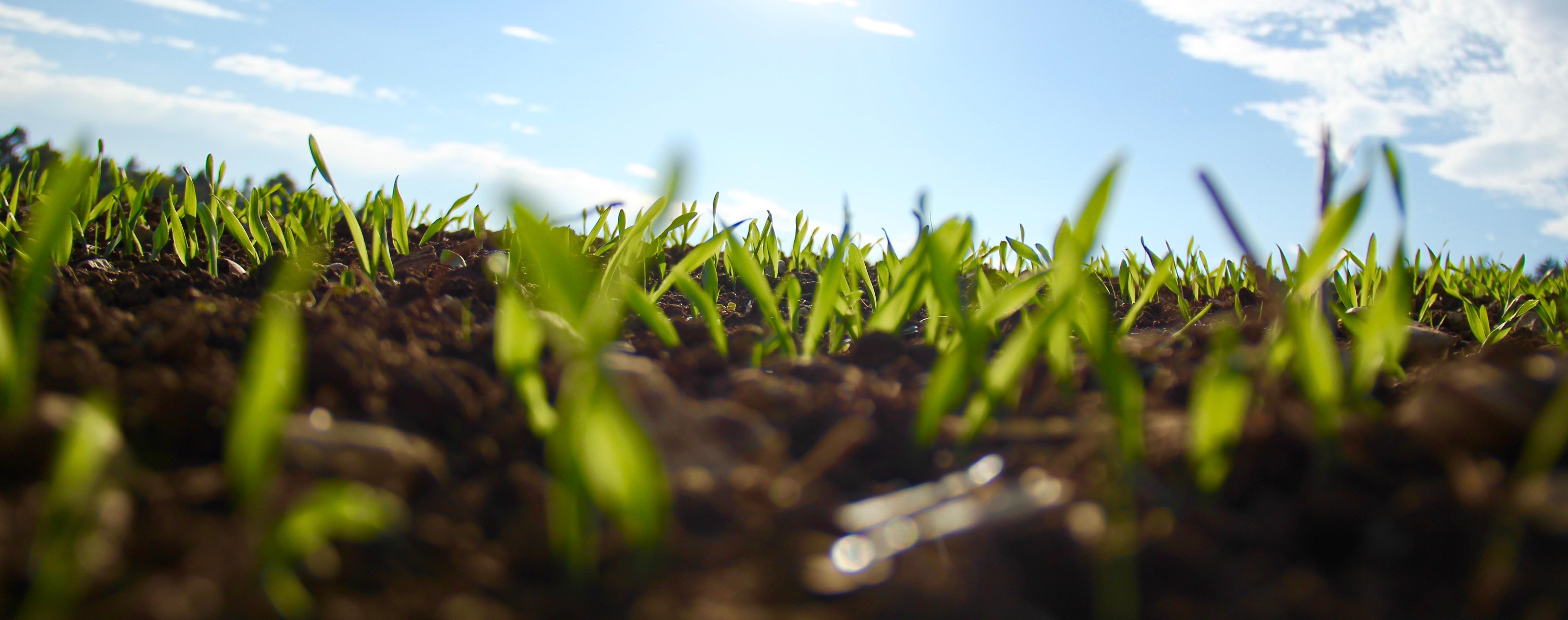 carbon Footprint - new shots of grass growing